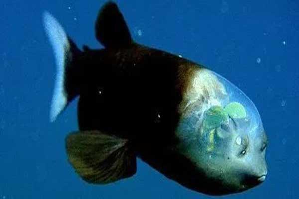 世界十大怪异的海洋生物 五彩鳗外表绚丽雌雄同体