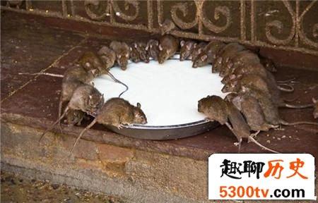 老鼠最大有多重?明朝发现一只大老鼠重达30斤